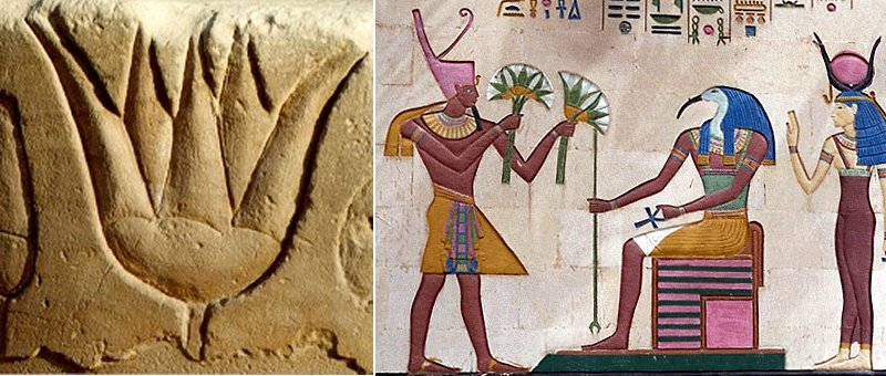 Ancient Egyptian Symbol Lotus - Egypt Tours Portal