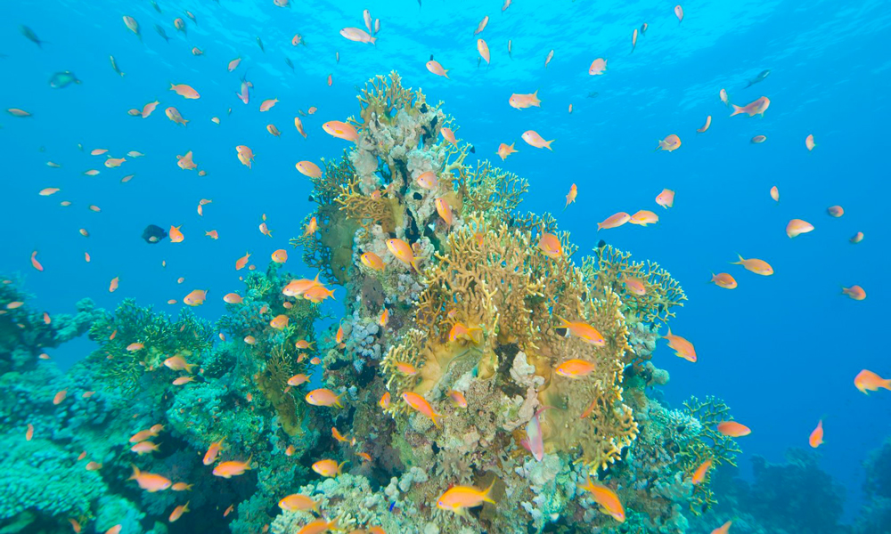 Marsa Abu Galawa - Hurghada Diving Sites - Egypt Tours Portal