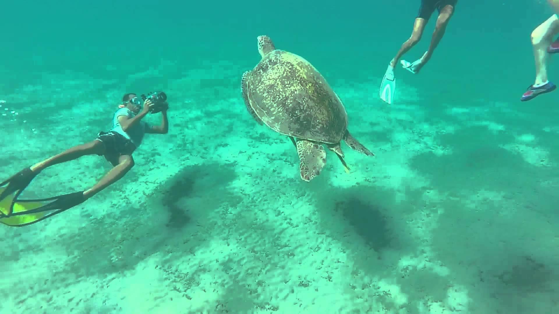 Turtle Bay Giftun island - Egypt Tours Portal