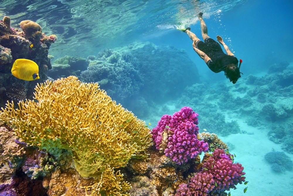 Snorkeling - Things to do in Marsa Alam - Egypt Tours Portal