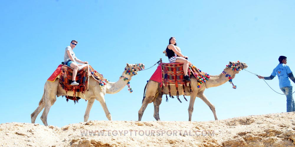 Camels Ride - Things to Do in Safaga - Egypt Tours Portal