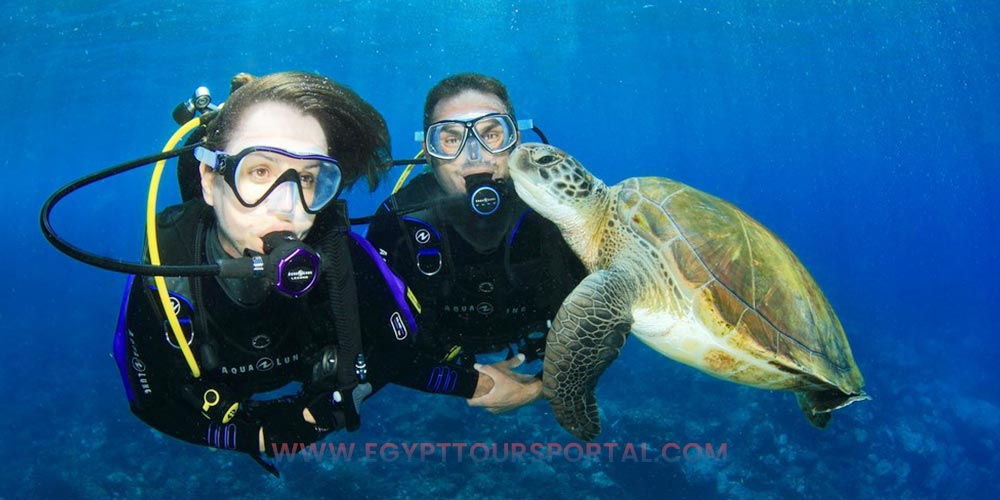 Diving - Things to Do in Safaga - Egypt Tours Portal