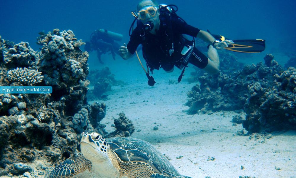 Sataya Reef in Marsa Alam - Things to Do in Marsa Alam - Egypt Tours Portal