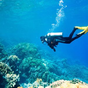 Diving Excursion In Marsa Alam