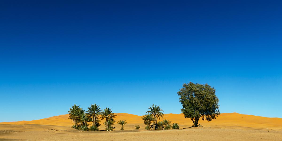 The Sahara - Egypt Desert Deserve to Discover for Adventure Travelers - Egypt Tours Portal