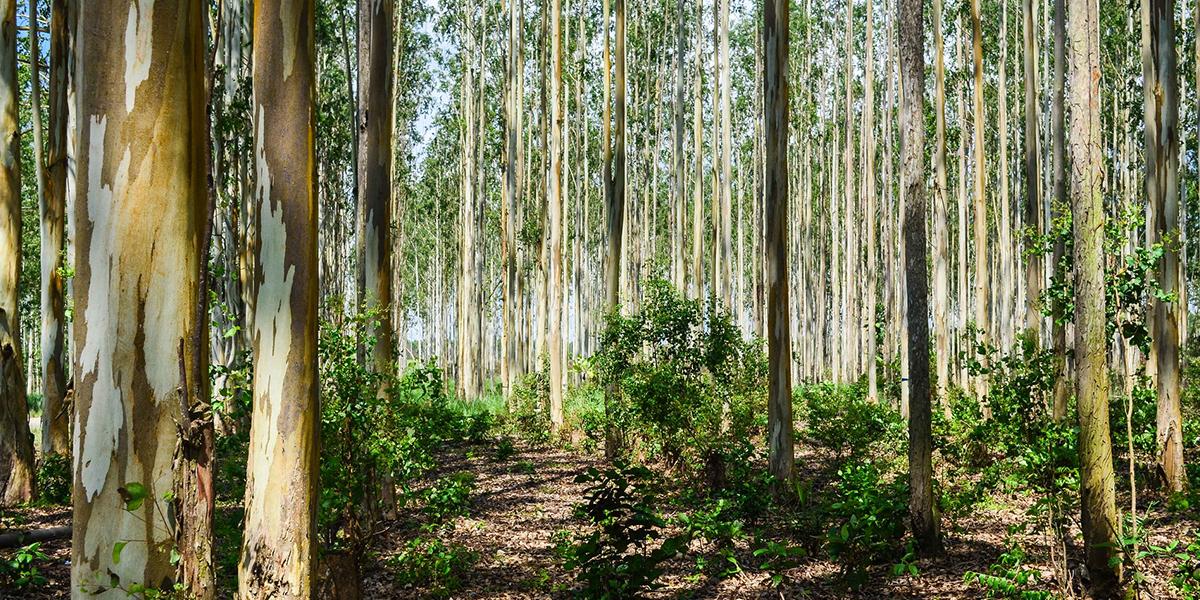 The Serapium Forest - Egypt Desert Deserve to Discover for Adventure Travelers - Egypt Tours Portal
