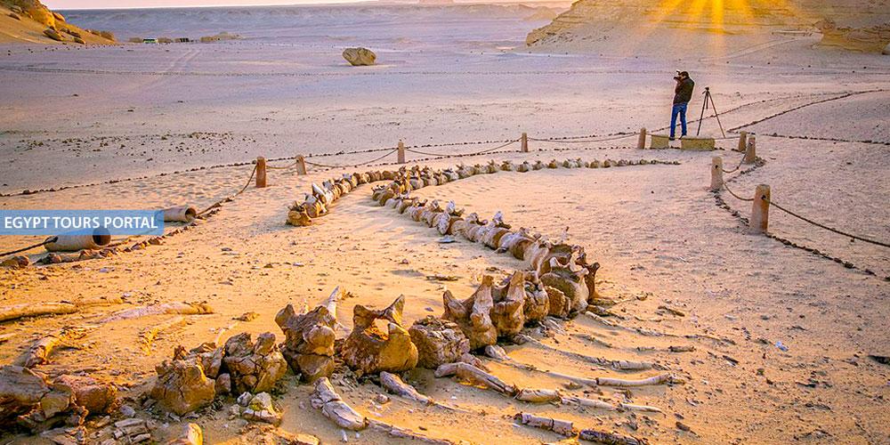 Wadi Al Hitan - UNESCO World Heritage Sites In Egypt - Egypt Tours Portal