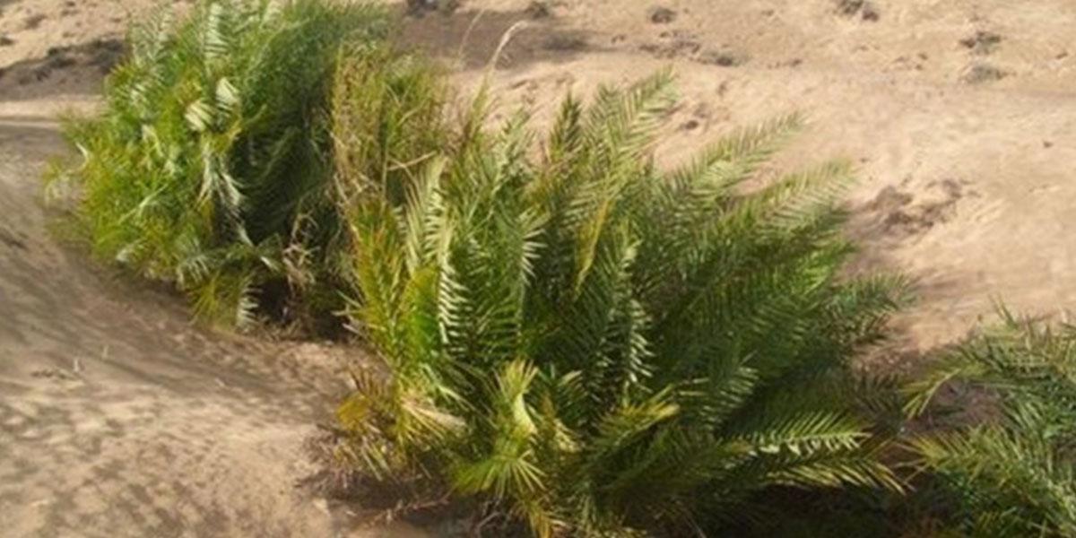 Al-Ahrash Reserve - Top National Parks in Egypt - Egypt Tours Portal