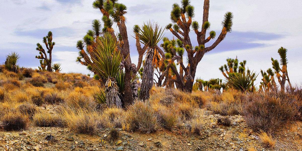 El-Omayed Reserve - Top National Parks in Egypt - Egypt Tours Portal