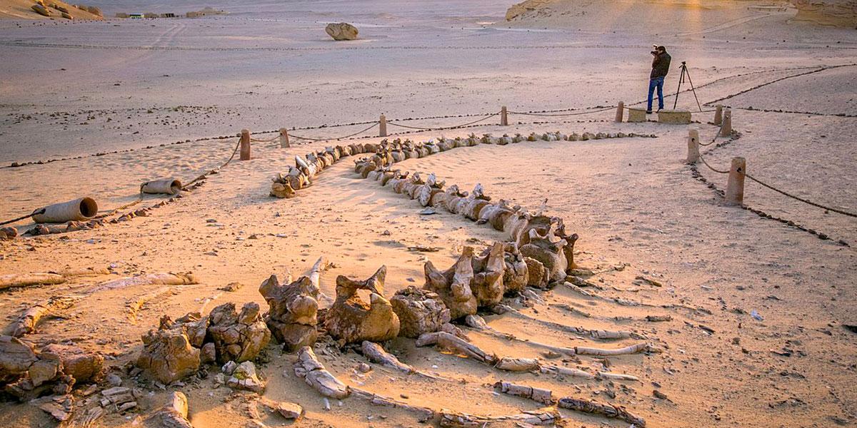 Wadi El-Hitan National Park - Top National Parks in Egypt - Egypt Tours Portal
