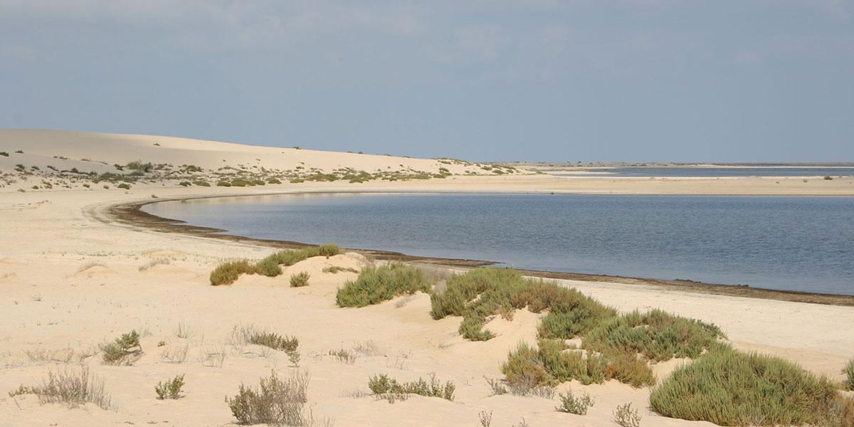 Zaranik Protected Area - Top National Parks in Egypt - Egypt Tours Portal
